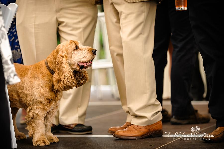 dog at wedding reception