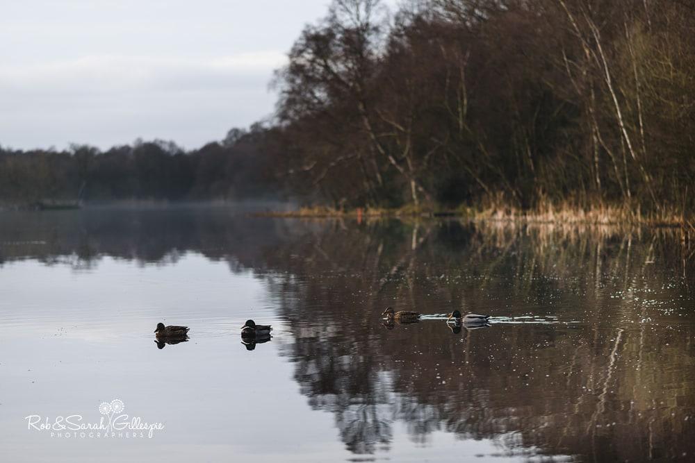 Ducks swimiming on Bracebridge Pool at The Boathouse Sutton Coldfield