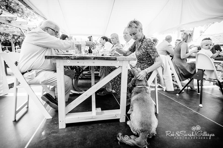 dog trying to get food at wedding reception