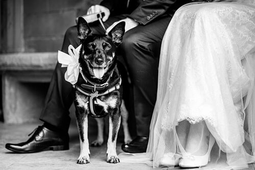 Bride and groom with their dog at Sherbourne Park wedding