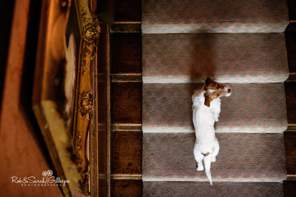 Dog on stairway at Delbury Hall
