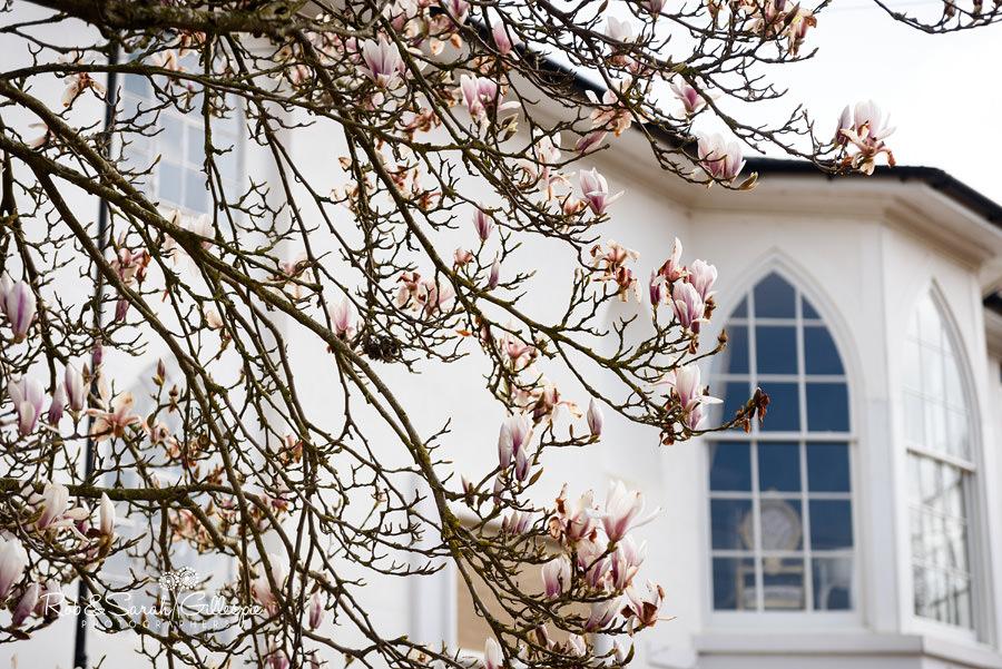 Blossom on tree outside Warwick House