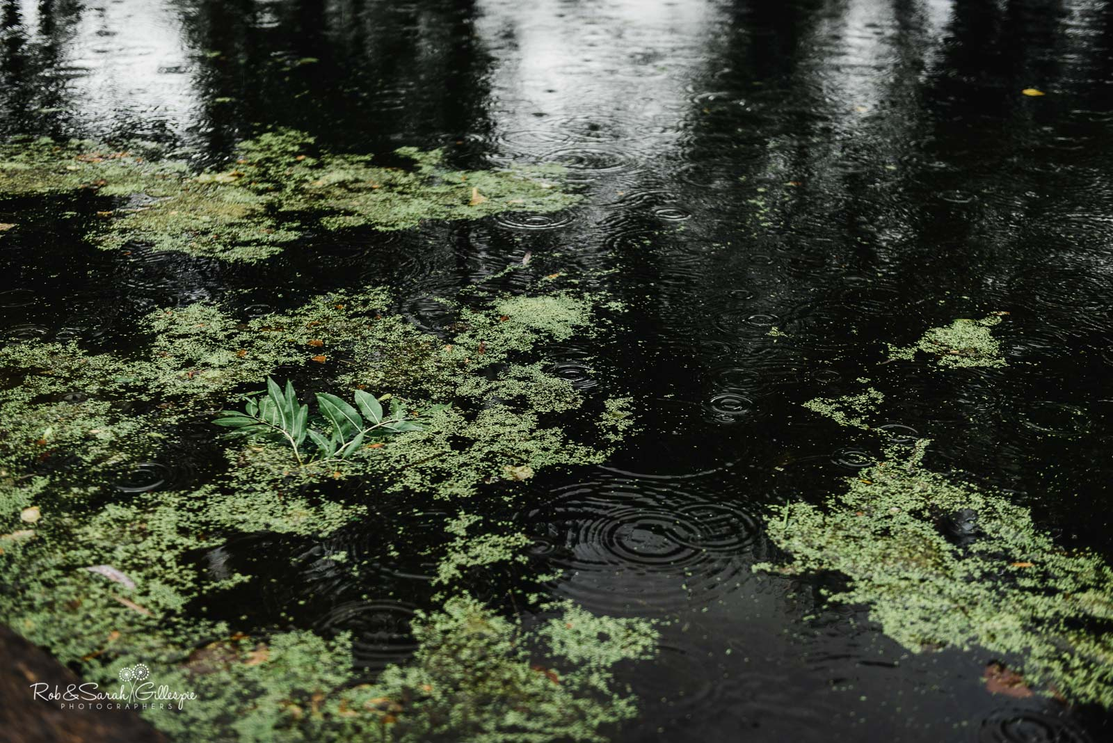 Wet weather at Wethele Manor in Warwickshire
