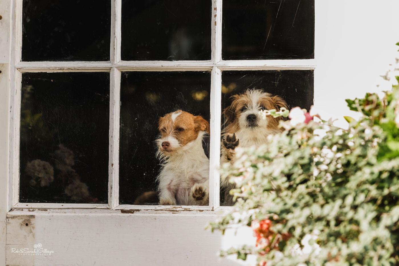 Dogs at Delbury Hall wedding