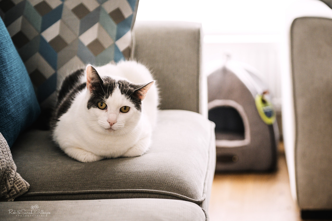 Cat sits on sofa as groom prepares for wedding