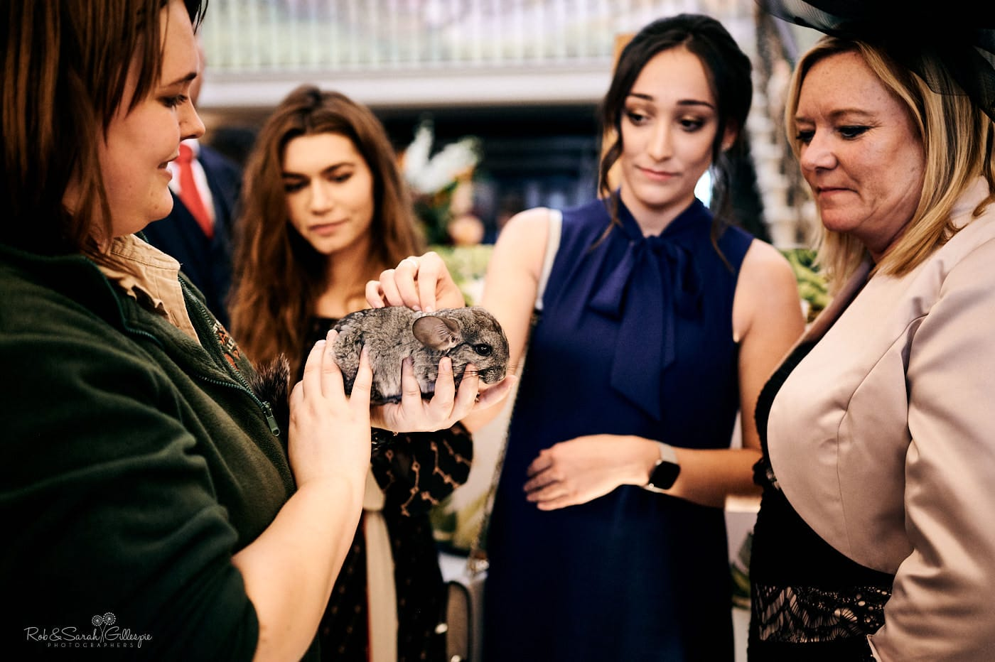 Wedding guests pet animals during Spring Grove House wedding reception