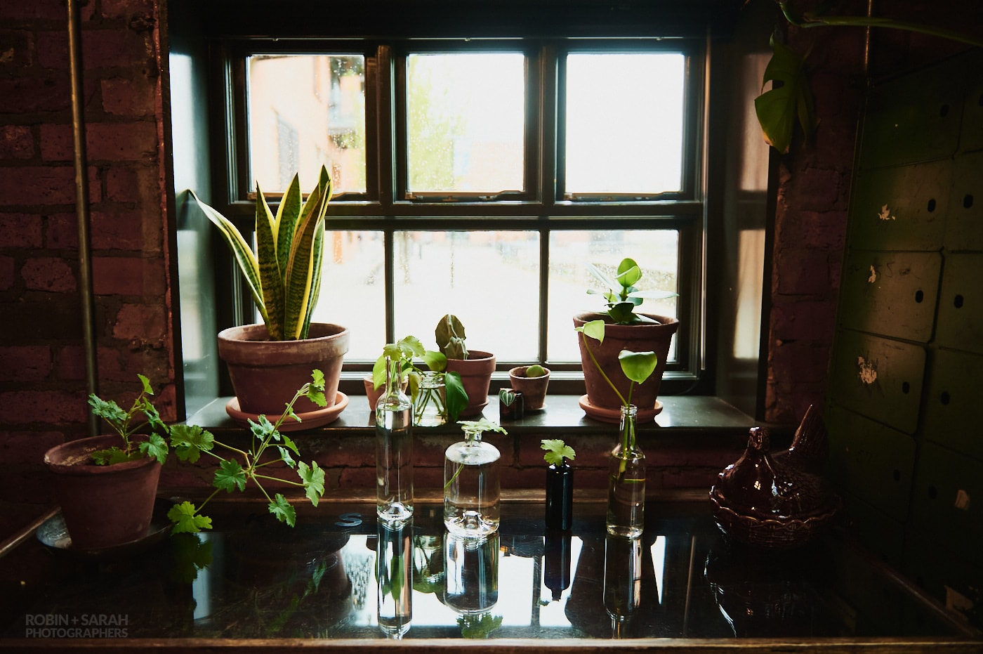 Potted plants in window at The Chimney House