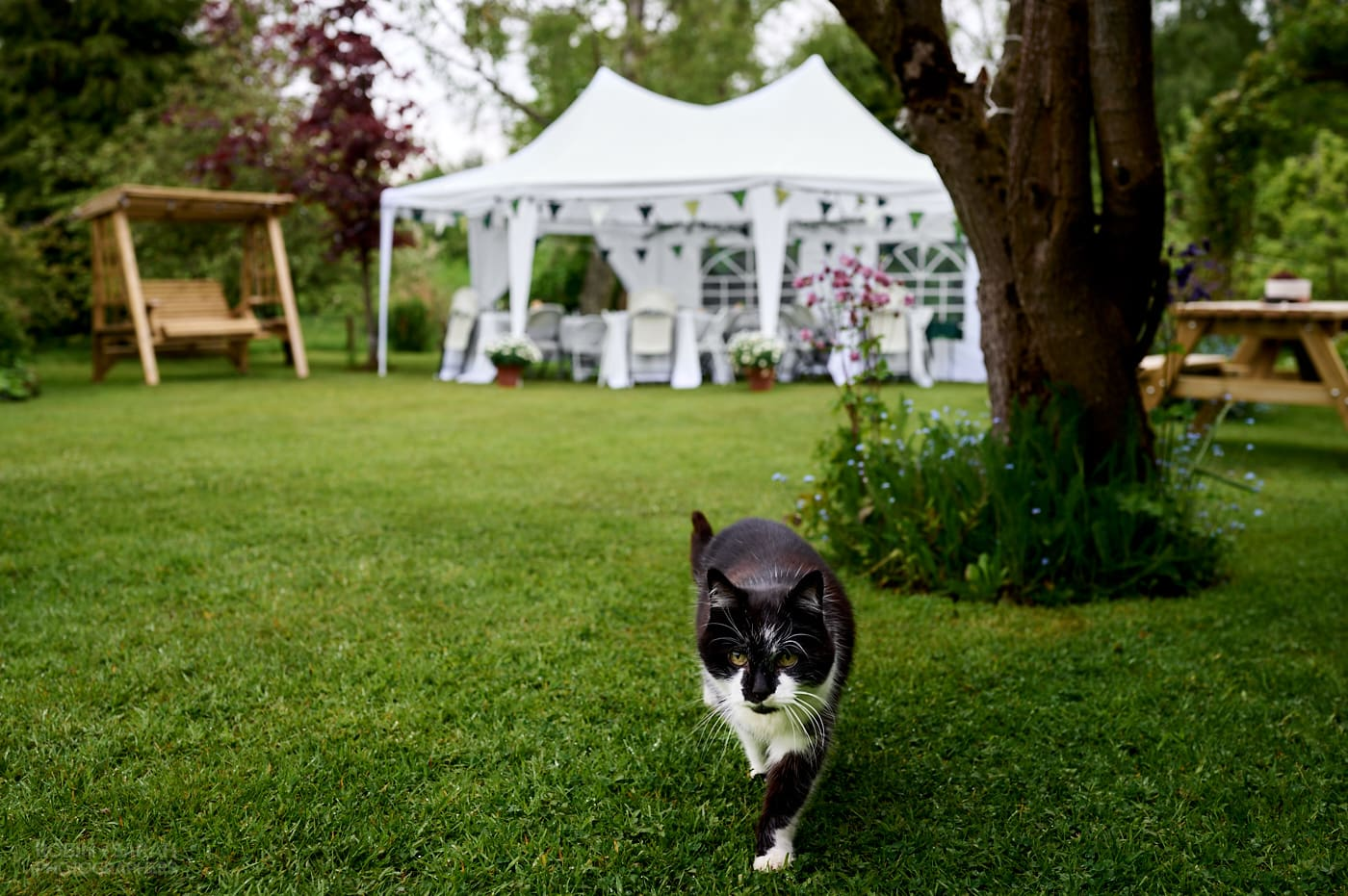 Small marquee set up in garden for wedding as black and white cat walks by