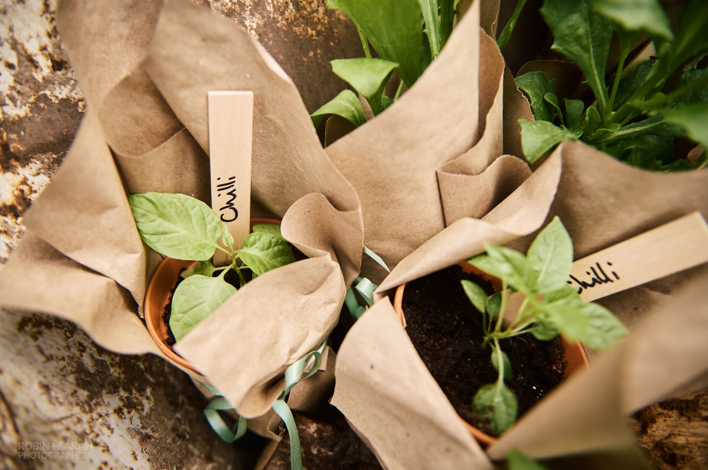 Potted plants for wedding guests